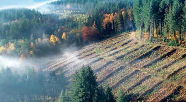 Pour pérenniser l'avenir de la forêt française, il faut planter plus