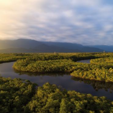 Au Brésil, l'Amazonie se gère avec des concessions